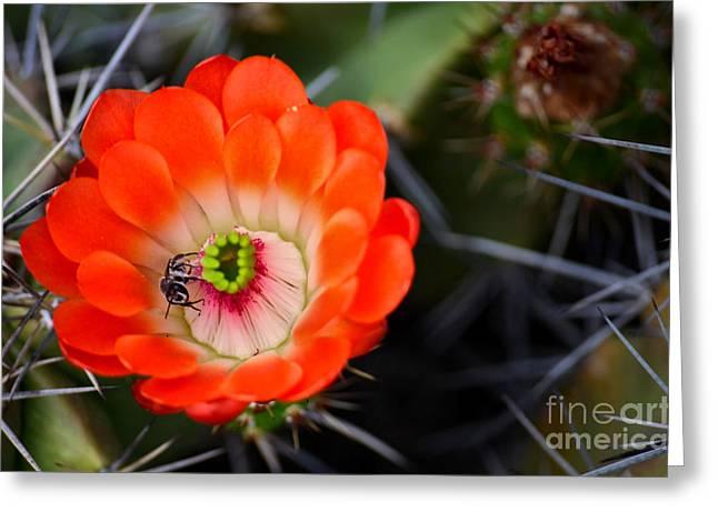 Bee Ware The Thorns Greeting Card by Deb Halloran