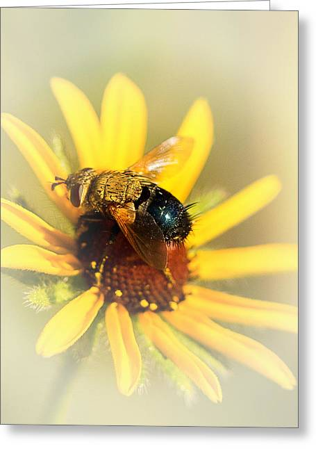 Recently Sold -  - Yellow Sunflower Greeting Cards - Bee with Flower Greeting Card by Darby Donaho