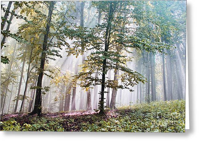 Beech Forest In Fog  Greeting Card by Odon Czintos