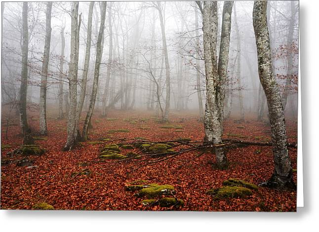 Park Scene Greeting Cards - Beech forest with fog Greeting Card by Mikel Martinez de Osaba