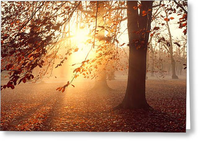 Illuminate Greeting Cards - Beech Trees Uppland Sweden Greeting Card by Panoramic Images