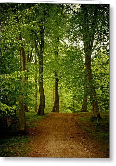 Jylland Greeting Cards - Beeches Greeting Card by Odd Jeppesen