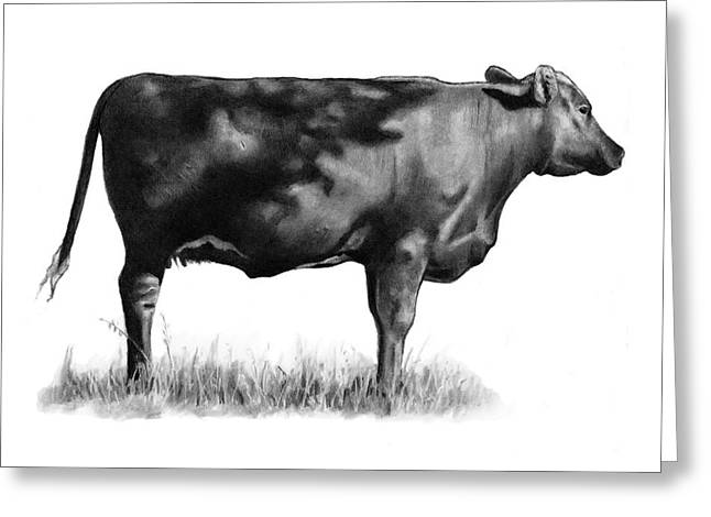 Steer Drawings Greeting Cards - Beef Cow In Sun And Shade Greeting Card by Joyce Geleynse
