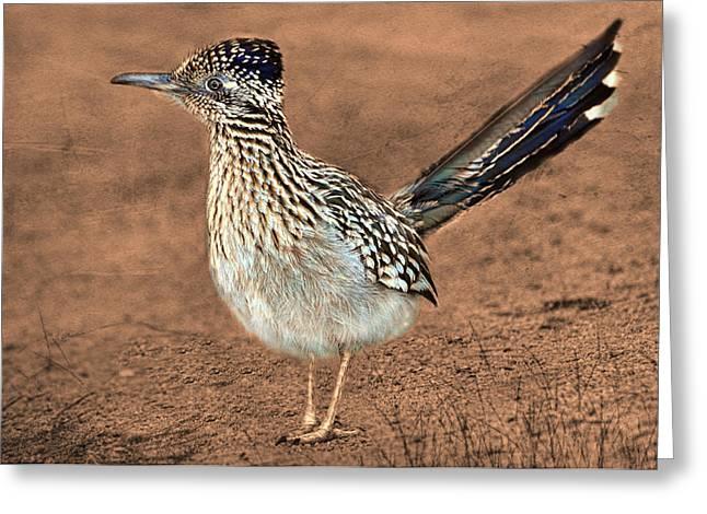 Hunting Bird Greeting Cards - Beep Beep Greeting Card by Barbara Manis