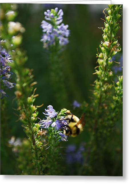 Garden Insects Greeting Cards - Bees Please Greeting Card by Aaron S Bedell