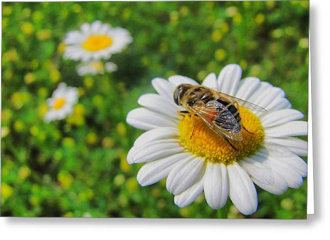 Transfer Greeting Cards - Bees Pollination Services Greeting Card by Maciej Froncisz