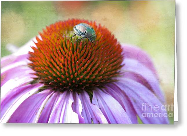 Pest Greeting Cards - Beetle Bug Greeting Card by Juli Scalzi