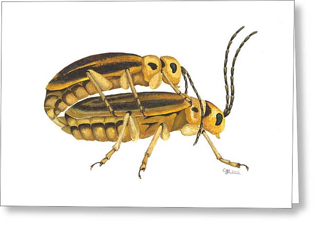Beetle Paintings Greeting Cards - Chrysomelid beetle mating pose Greeting Card by Cindy Hitchcock