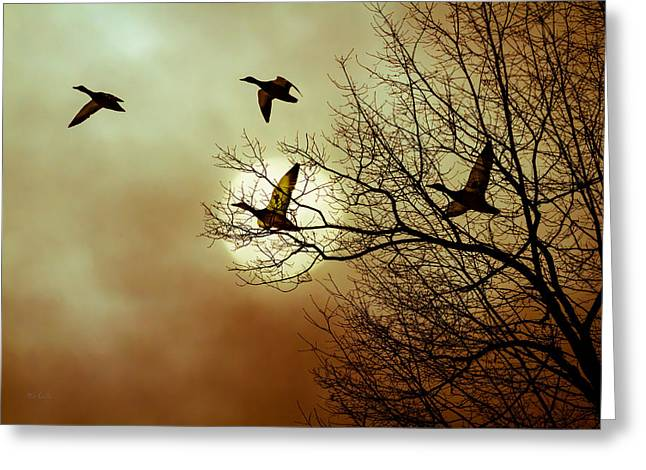 Before a Winter Sky Greeting Card by Bob Orsillo