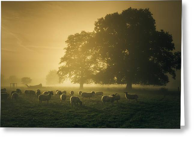 Gathering Photographs Greeting Cards - Before dawn gathering Greeting Card by Chris Fletcher