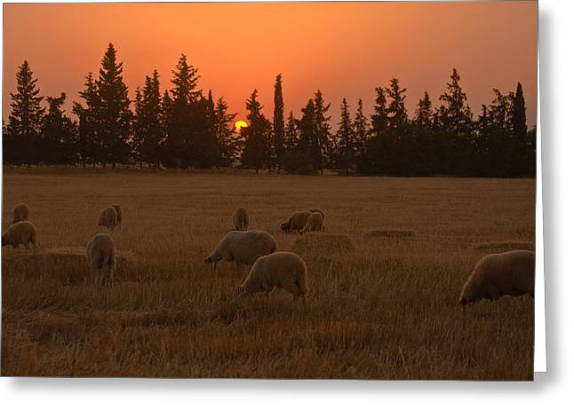 Harvest Art Greeting Cards - Before the night. Greeting Card by Jawaharlal Layachi