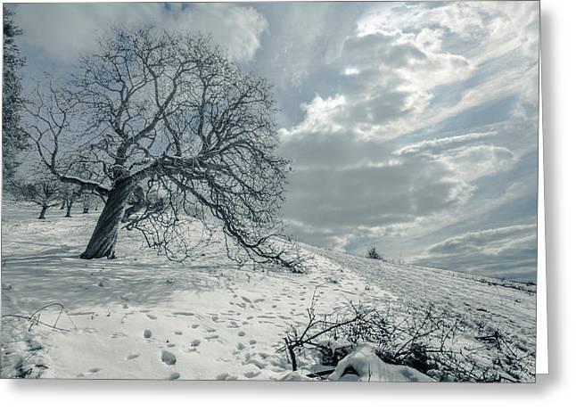 Snow Scene Landscape Greeting Cards - Begin the melting procedure Greeting Card by Chris Fletcher