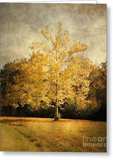Autumn Scenes Greeting Cards - Beginning of Autumn Greeting Card by Jai Johnson