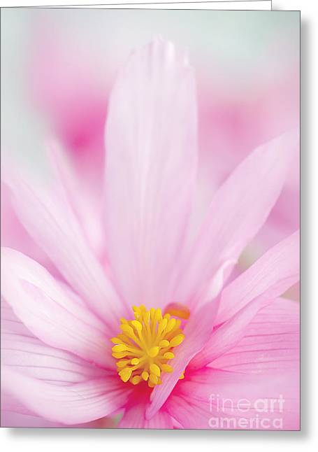 Hanging Baskets Greeting Cards - Begonia boliviensis pink Greeting Card by Jacky Parker