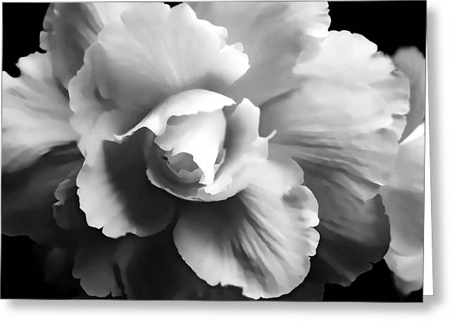Begonias Greeting Cards - Begonia Flower Monochrome Greeting Card by Jennie Marie Schell