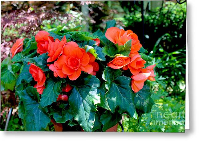 Botanical Pyrography Greeting Cards - Begonia Plant Greeting Card by Corey Ford