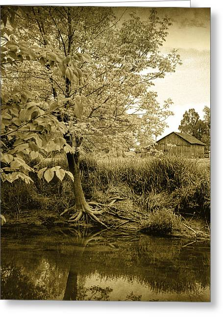 Tree Roots Art Greeting Cards - Behind Eds Barn Greeting Card by Randall Nyhof