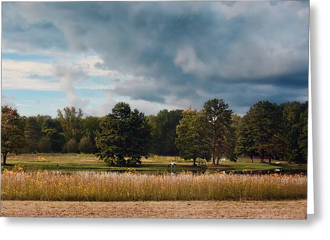 Fall Scenes Greeting Cards - Behind Natures Fence Greeting Card by Jai Johnson