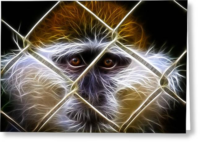 Chain Gang Greeting Cards - Behind the Fence Greeting Card by Steve McKinzie