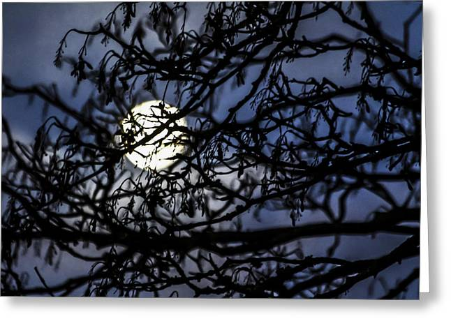 Luna Greeting Cards - Behind The Veil Greeting Card by Odd Jeppesen