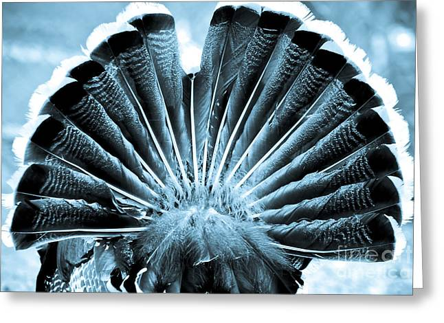 Best Selling Bird Art Greeting Cards - Behind Turkey Greeting Card by Syed Aqueel