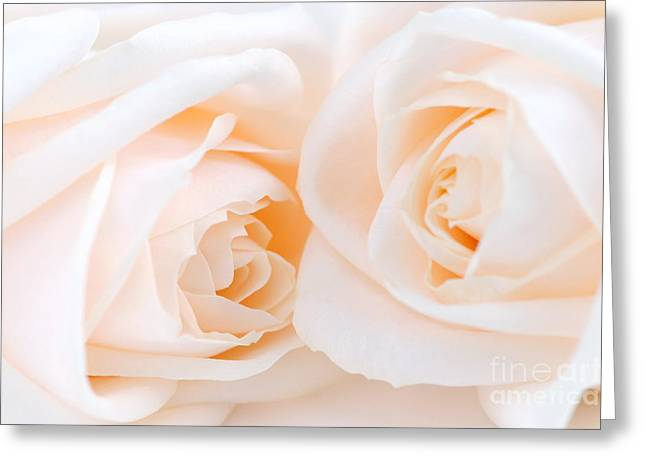 Couple Greeting Cards - Beige roses Greeting Card by Elena Elisseeva