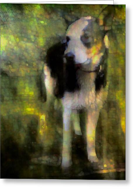 Dappled Light Greeting Cards - Being Greeting Card by Suzy Norris