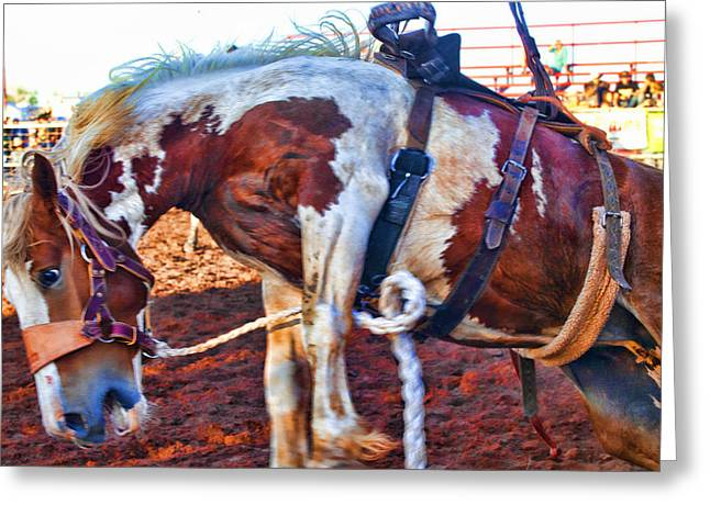 Bucking Horses Greeting Cards - Being the boss Greeting Card by Toni Hopper