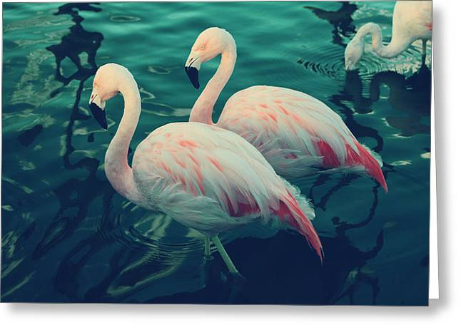 Flamingos Greeting Cards - Being With You Greeting Card by Laurie Search