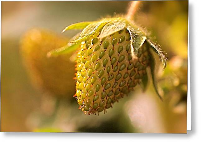 Strawberries Greeting Cards - Being Young and Green Greeting Card by Rona Black