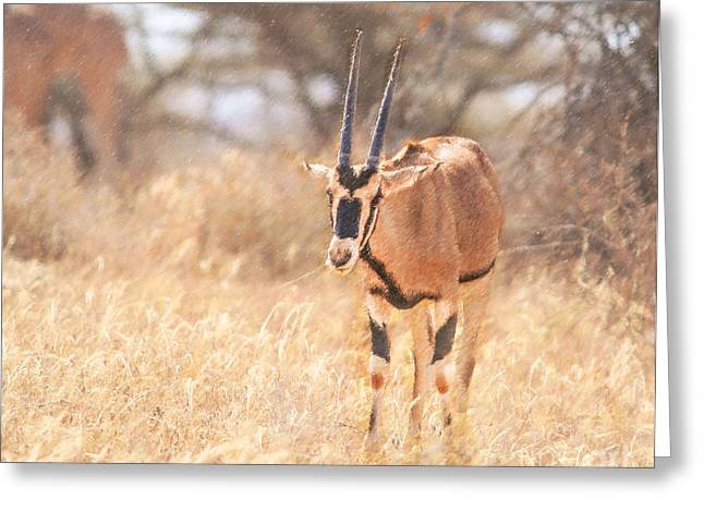 Africa Greeting Cards - Beisa Oryx Orxy beisa Greeting Card by Liz Leyden