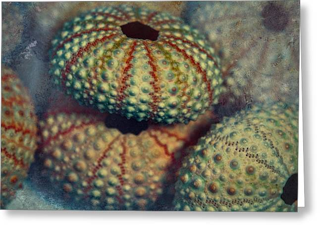 Shell Pattern Greeting Cards - Bejeweled Greeting Card by Bonnie Bruno