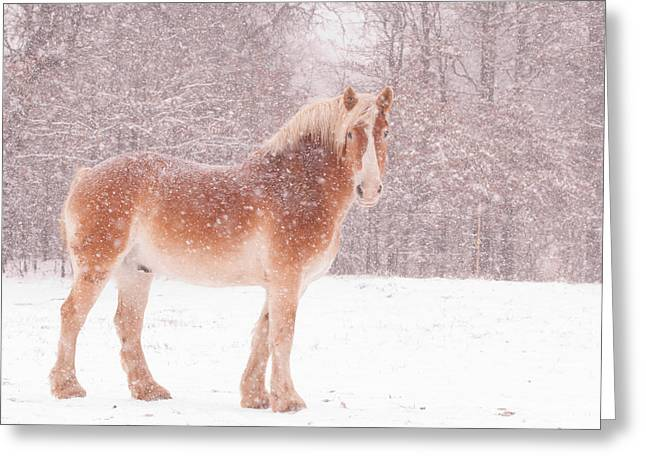 Blizzard Scenes Greeting Cards - Belgian in a Blizzard Greeting Card by Sari ONeal