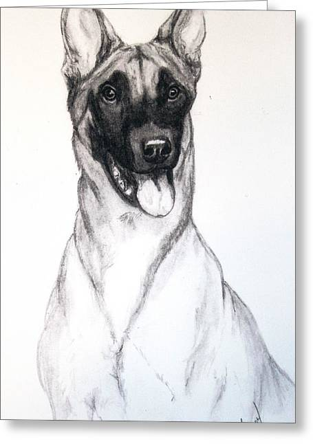 Working Dog Drawings Greeting Cards - Belgian Malinois Greeting Card by Lorah Buchanan