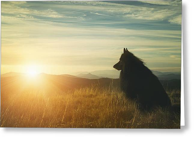 Working Dog Greeting Cards - Belgian Shepherd Groenendael watching a sunset Greeting Card by Wolf Shadow  Photography