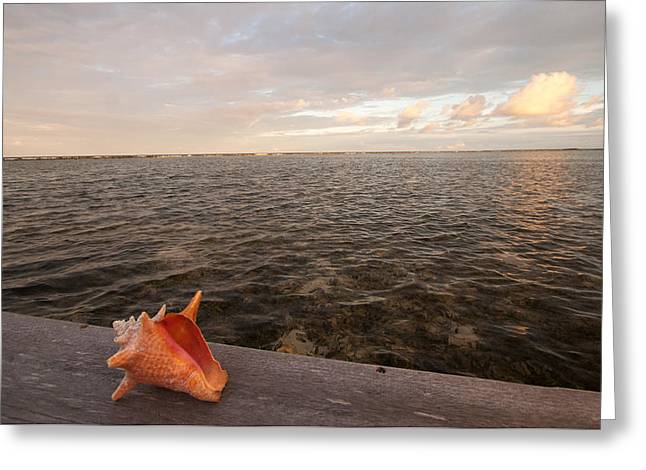 Shell Collecting Greeting Cards - Belize Scenic Greeting Card by Jean Noren