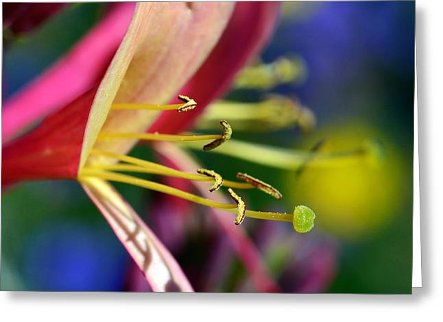 Bell Flower In Red Greeting Card by Toppart Sweden