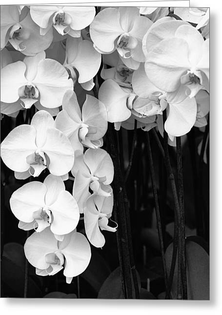 Archangel Art Greeting Cards - BELL ORCHIDS Palm Springs Greeting Card by William Dey