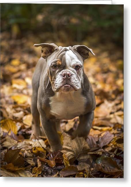 Recently Sold -  - Guard Dog Greeting Cards - Bella Greeting Card by Joye Ardyn Durham