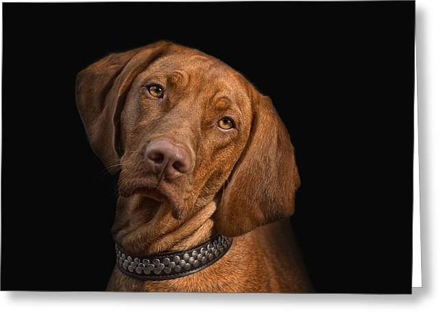Magyar Vizsla Greeting Cards - Bella Greeting Card by Joachim G Pinkawa