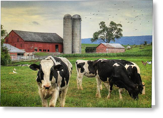 Amish Greeting Cards - Belleville Amish Farm Greeting Card by Lori Deiter