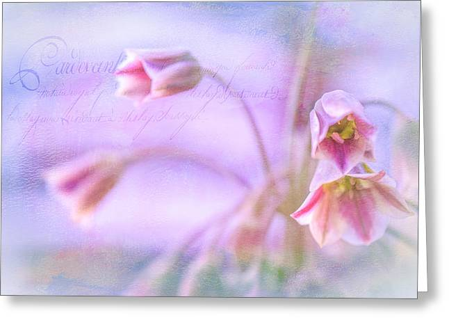 Leicht Greeting Cards - Bellies in pink  2 Greeting Card by Annette Hanl