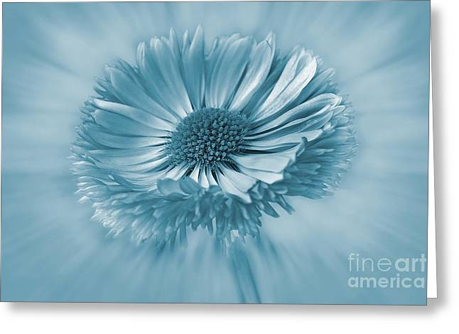 Bellis Greeting Cards - Bellis Cyanotype Greeting Card by John Edwards