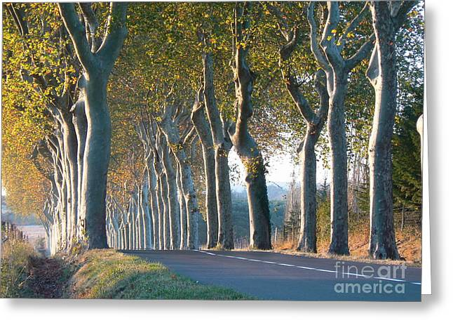South Of France Greeting Cards - Beloved Plane Trees Greeting Card by France  Art