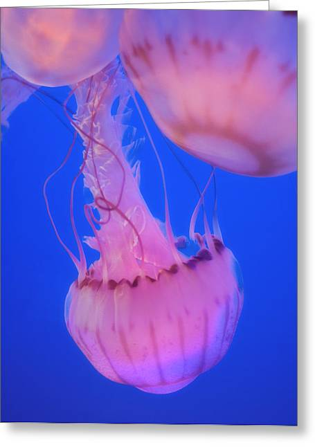 Sea Life Digital Art Greeting Cards - Below The Surface 2 Greeting Card by Jack Zulli