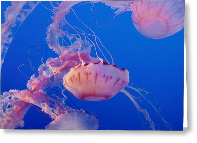 Jelly Fish Greeting Cards - Below The Surface 3 Greeting Card by Jack Zulli