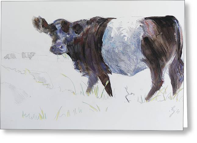 Belt Drawings Greeting Cards - Belted Galloway Cow Illustration Greeting Card by Mike Jory