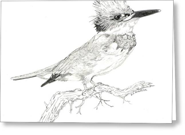 Belt Drawings Greeting Cards - Belted Kingfisher Greeting Card by Donald Koehler