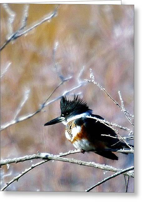 Living Things Greeting Cards - Belted Kingfisher  Greeting Card by Jeff  Swan