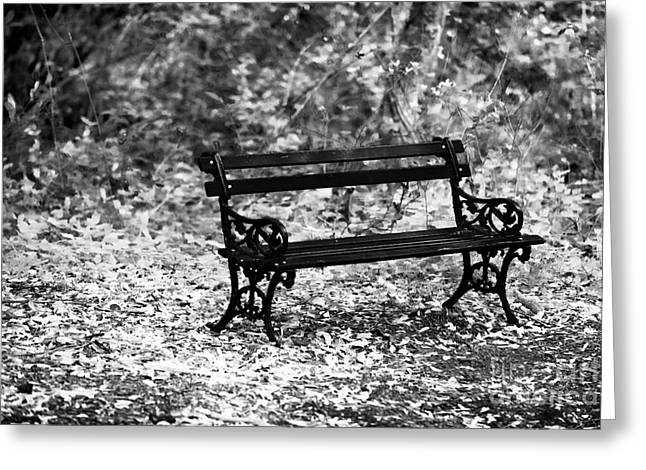 At Work Greeting Cards - Bench at Charles Town Greeting Card by John Rizzuto